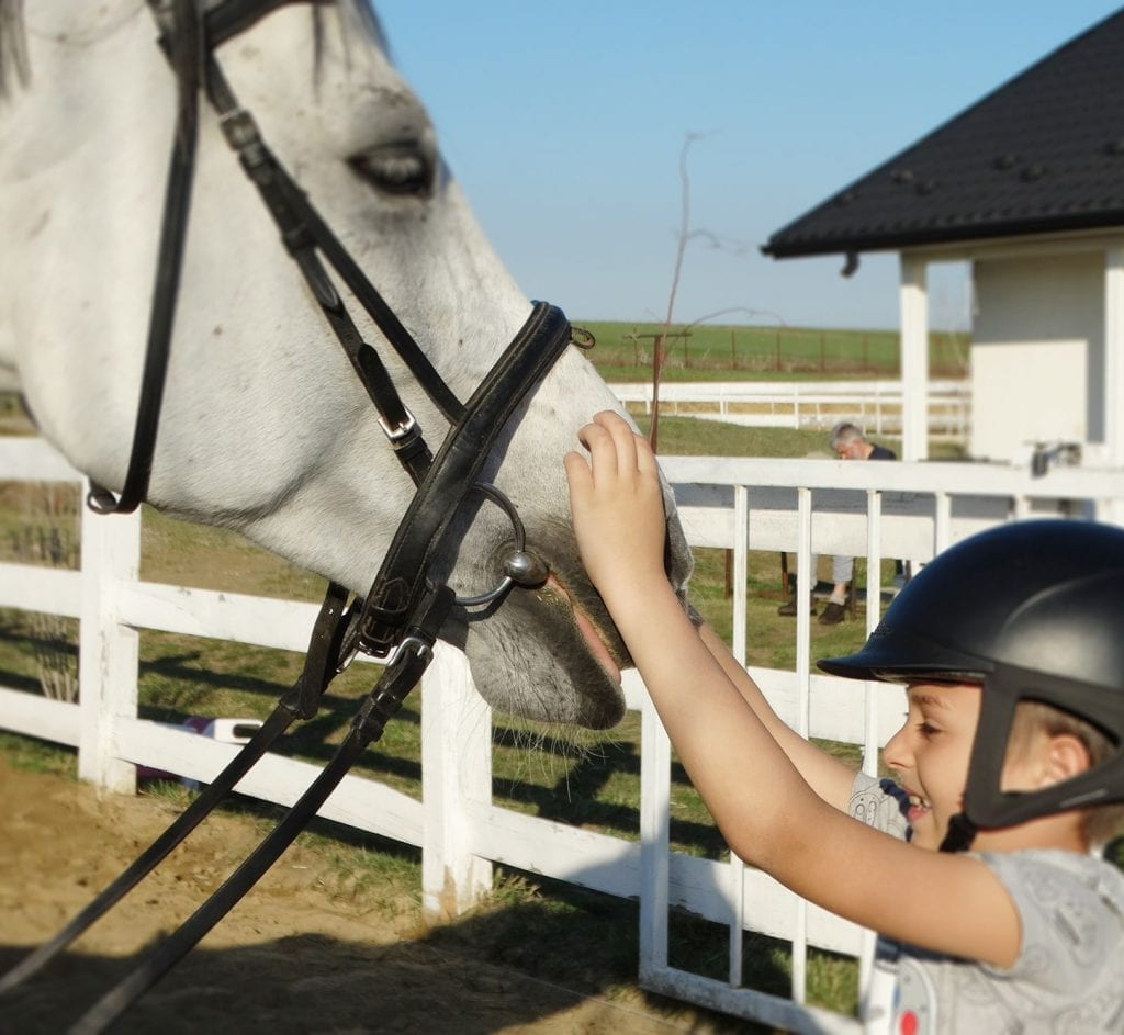 Equester - cum sa te apropii de un cal